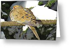 Cold Dove Greeting Card