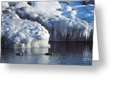 Cold Ducks  Greeting Card