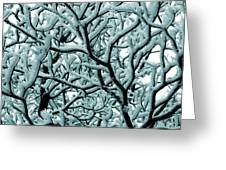 Cold Frosted Limbs Above Greeting Card