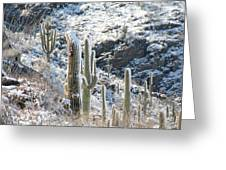 Cold Saguaros Greeting Card
