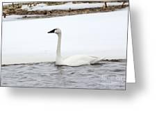Cold Swim Greeting Card