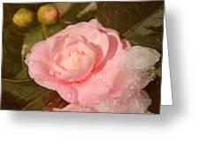 Cold Swirled Camellia Greeting Card
