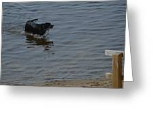 Cold Water Fetch Greeting Card