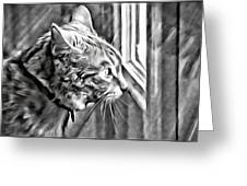 Cole Kitty Watchful Greeting Card