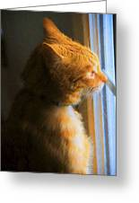 Colekitty On The Lookout Greeting Card