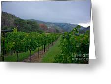 Colibri Vineyards Greeting Card