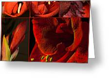 Collage - Amaryllis - Red 01- Elena Yakubovich Greeting Card