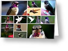 Collage Of Hummers 2 Greeting Card