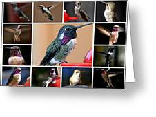 Collage Of Hummers Greeting Card