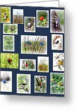 Collage Of Indigos 6 Greeting Card