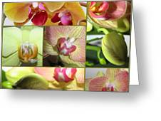 Collage Orchids 01yellow Green - Elena Yakubovich Greeting Card