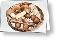 Collected Mushrooms Greeting Card