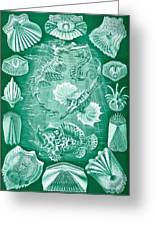 Collection Of Teleostei Greeting Card by Ernst Haeckel