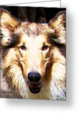Collie Dog Art - Sunshine Greeting Card by Sharon Cummings