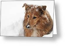Collie In The Snow Greeting Card