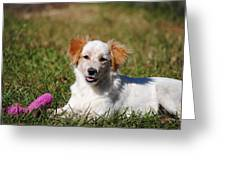 Collie Puppy Greeting Card