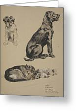 Collie, Retriever, Alstian And Keeshund Greeting Card