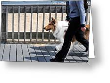 Collie Walk Greeting Card