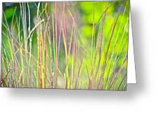 Collier-seminole Sp 15 Greeting Card