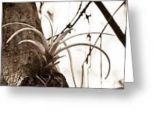 Collier-seminole Sp 18 Greeting Card