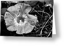 Collier-seminole Sp 22 Greeting Card