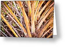 Collier-seminole Sp 32 Greeting Card