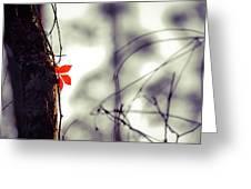 Collier-seminole Sp 4 Greeting Card