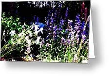 Colombine Flowers Greeting Card
