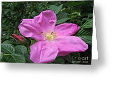 Colonial Rose - Floral Greeting Card