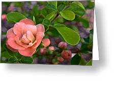 Color 133 Greeting Card