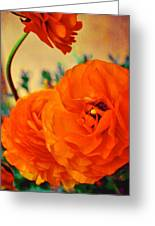 Color 149 Greeting Card