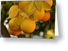 Super Bright Oranges On A Branch Greeting Card
