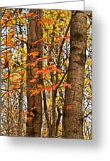 Color And Trees Lan 225 Greeting Card
