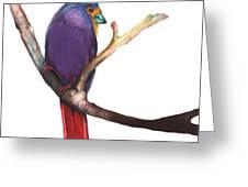 Color Bird 7 Greeting Card