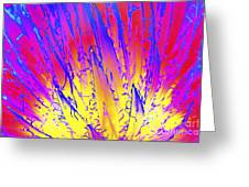 Color Burst Agave Greeting Card