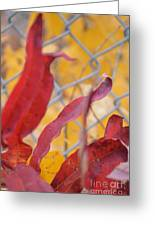 Color Containment  Greeting Card