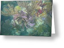 Color Corals Greeting Card by Adam Jewell