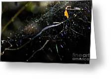 Color Dots Spider Net Greeting Card