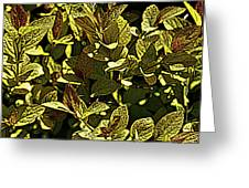 Color Engraving 1 Greeting Card