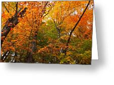 Color Filled Greeting Card