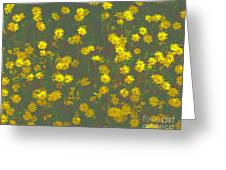 Color Flower Wall Greeting Card