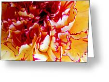 Color In A Carnation Greeting Card