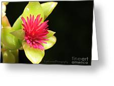 Flower - Delicate As Life Greeting Card