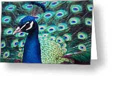 Color Me Peacock Greeting Card