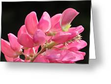 Color Of The Day Greeting Card