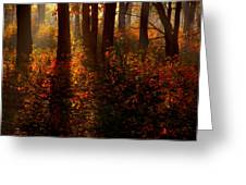 Color On The Forest Floor Greeting Card