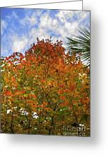 Color To The Sky Greeting Card