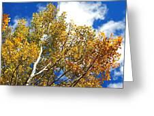 Colorado Aspens And Blue Skies Greeting Card