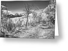 Colorado Backcountry Autumn View Bw Greeting Card by James BO  Insogna