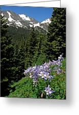 Colorado Classic Greeting Card by George Tuffy